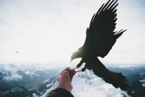 Epischer Vogel vor Bergkulisse