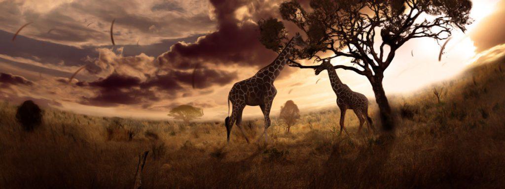 Giraffen Kopie