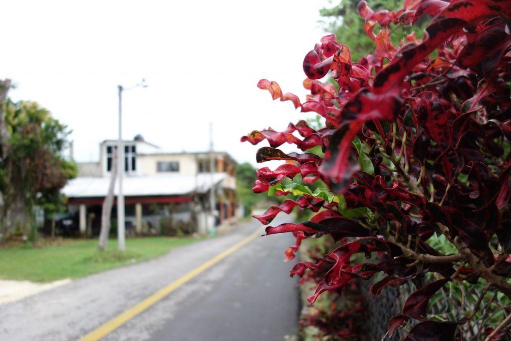 Blumen in Bacalar
