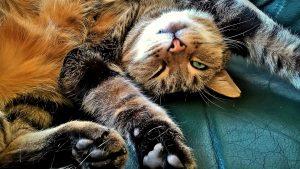 Katzen haben auch kein Bock auf Leistung