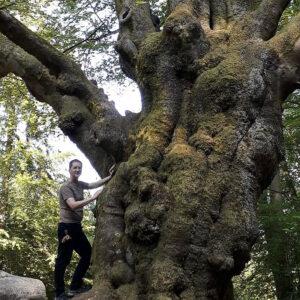 Ein großer knorriger Baum, an dem ein Mann lehnt. Der Mann wirkt im Vergleich sehr klein.