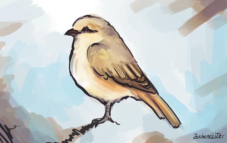 Ein Bild der Vogelart Lanius isabellinus, auch bekannt als Isabellwürger. Das Bild ist eine Illustration im Stil einer digitalen Malerei.